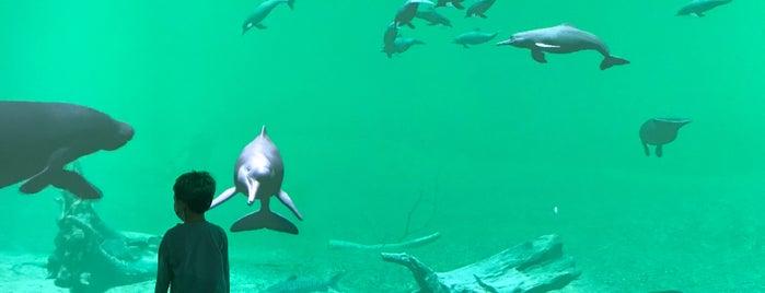 Kawasui (Kawasaki Aquarium) is one of Orte, die Masahiro gefallen.