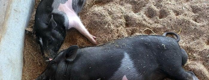 Laos Buffalo Dairy is one of Orte, die Kavitha gefallen.