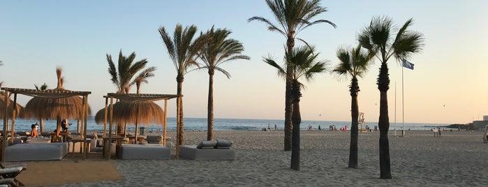 Playa Padre is one of Lieux qui ont plu à Peddi.