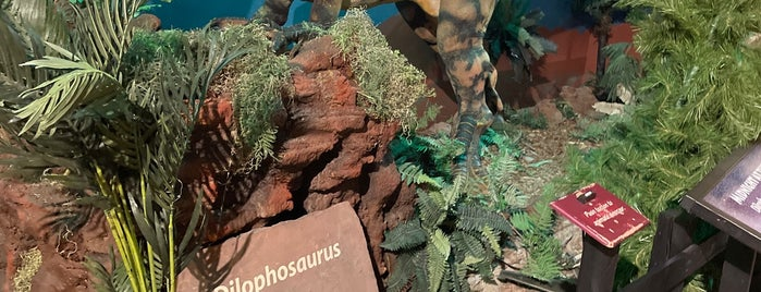 Dinosaur Journey Museum is one of Community Cinema.