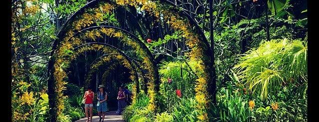 Singapore Botanic Gardens is one of Singapore Things To Do!!.
