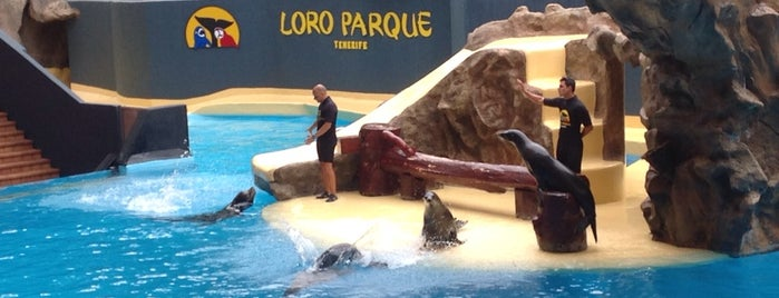 Loro Parque - Leones Marinos Show is one of Irina's Liked Places.