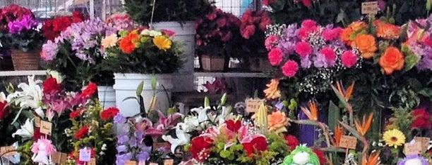 Flora Pracinha Do Batel is one of CWB - Floriculturas.