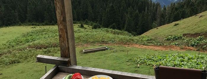 Gito Yaylası is one of Mountain Resorts In Black Sea Region.
