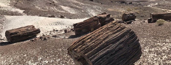 Petrified Forest National Park is one of National Recreation Areas.