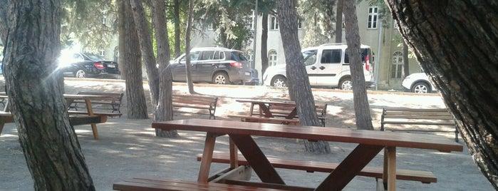Yıldız Park Café is one of สถานที่ที่ Caner ถูกใจ.