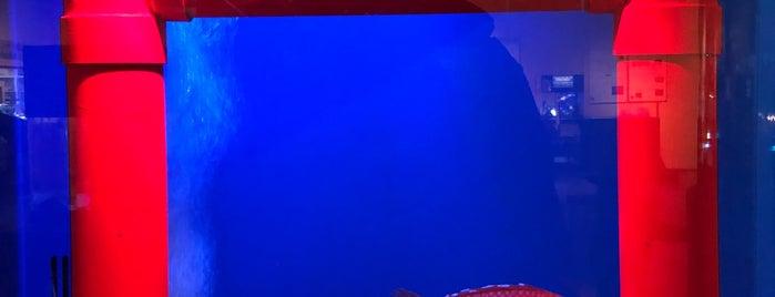 Tottori Karo Crab Aquarium is one of Orte, die Ricky gefallen.