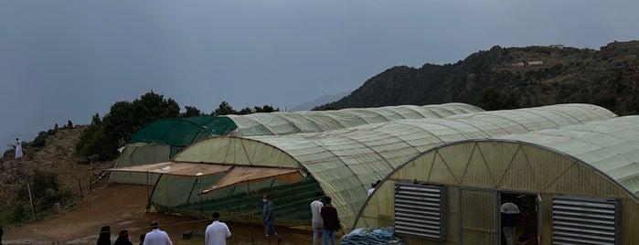 مزرعة الفراولة is one of Lugares guardados de Soly.