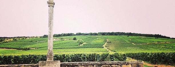 Romanée Conti Grand Cru is one of Ram's to-do list around the world.