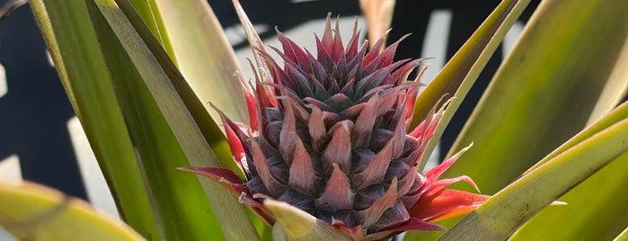 Maui Pineapple Tours is one of lino : понравившиеся места.