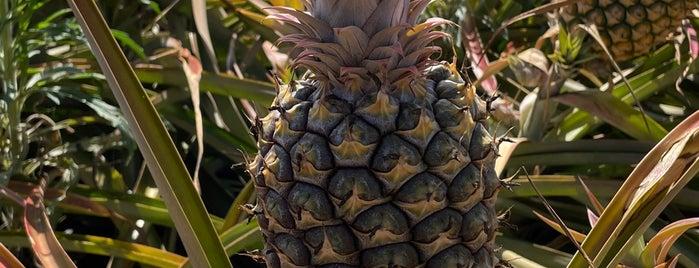 Maui Gold Pineapple Fields is one of lino : понравившиеся места.