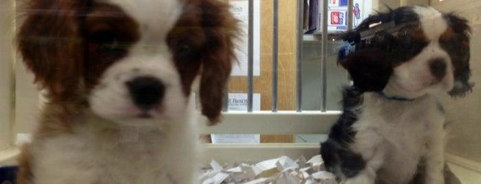 Har Mar Pet Shop is one of Tempat yang Disukai Alan.