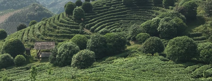 七仙峰茶场 is one of Posti che sono piaciuti a Collin.