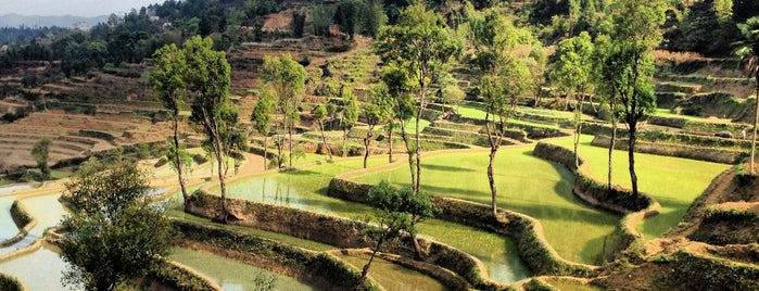 Baohua Rice Terrace is one of Far Far Away.