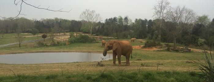 NC Zoo: Africa is one of Orte, die Olesya gefallen.