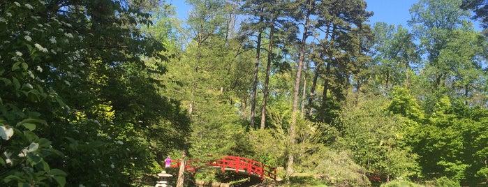 Sarah P. Duke Gardens is one of Locais curtidos por Olesya.