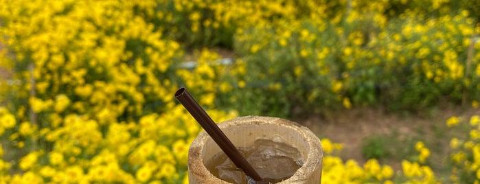 ไร่ดอกเก็กฮวยวังธาร is one of เชียงใหม่_3_Coffee.
