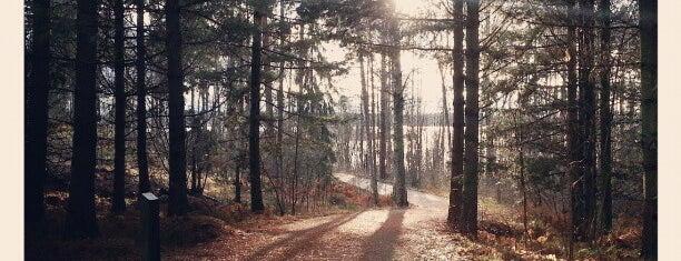 Viikin arboretum is one of helsinki.
