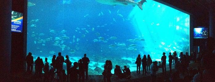 Georgia Aquarium is one of Things To Do Near The Georgia Dome.