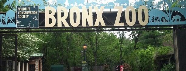 Bronx Hayvanat Bahçesi is one of NYC Outings.