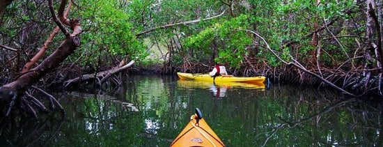 Kayaking @ East Mangrove is one of Best things to do in Abu Dhabi.