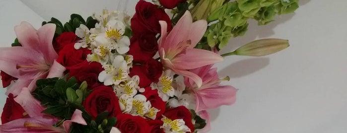 Flowers & Feelings is one of Lugares guardados de Fabiola.