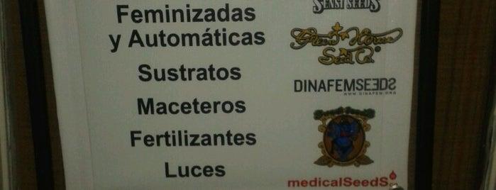 Caracol Los Leones is one of Providencia.