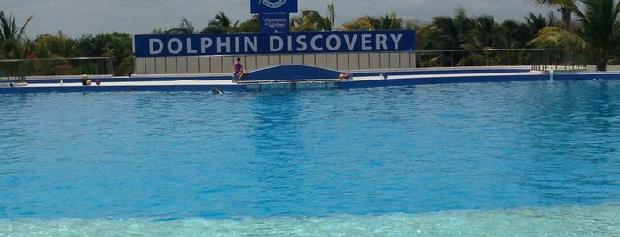 Dolphin Maroma By Dolphin Discovery is one of สถานที่ที่ Dalí ถูกใจ.