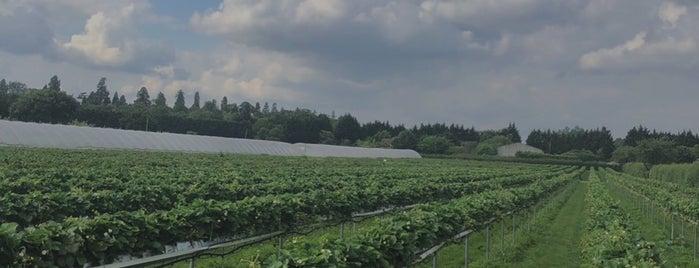 Copas Farm PYO is one of London.