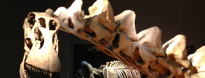 Perot Museum of Nature and Science is one of MUST-DOs in DALLAS/FORT WORTH.
