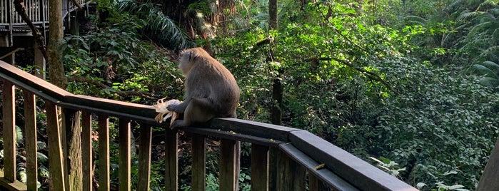 Jaba Pura Dalem Agung Monkey Forest is one of Hello Asia.