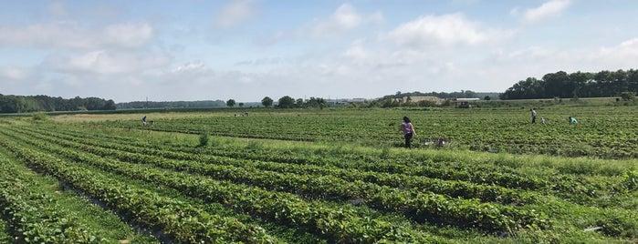Cullipher Farm is one of Lugares favoritos de Dawn.