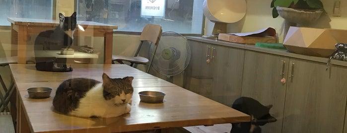 讀貓園中途咖啡 is one of Cats Café.