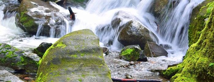Wahkeena Falls Trail is one of สถานที่ที่ Star ถูกใจ.