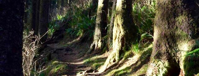 Cooper Mountain Nature Trail is one of All Things Atumnal.
