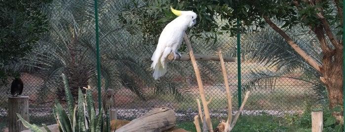 Nova Equestrain Resort is one of Posti che sono piaciuti a Lamia 🇸🇦  💛💙.