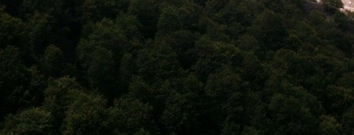 Αυχενας Χαλικίου, Δάσος Ρονας,  Πηγές Αχελωου is one of To Do List Tzoumerka.