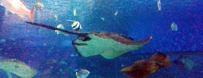 Oceanarium is one of สถานที่ที่บันทึกไว้ของ Marc.