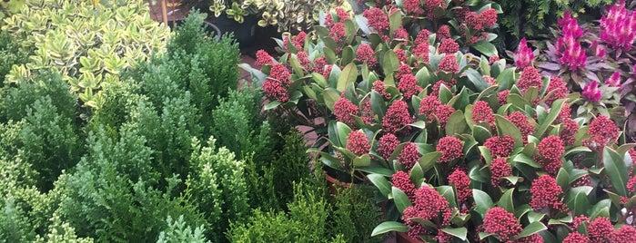 Palmiye Botanik is one of Ceren'in Kaydettiği Mekanlar.