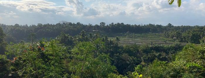 The Samaya Ubud - Bali is one of Nin 님이 좋아한 장소.