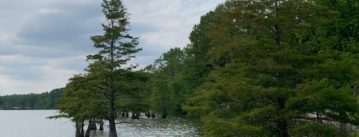 Lake Chicot State Park is one of 82 Best Birdwatching Spots in the US.