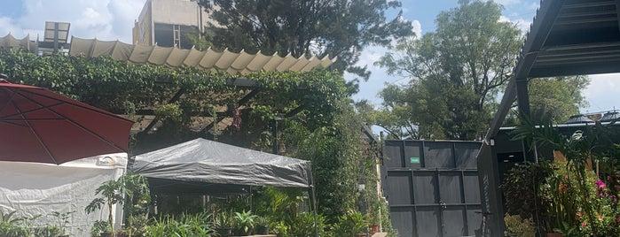 Jardin Juárez is one of Paco : понравившиеся места.