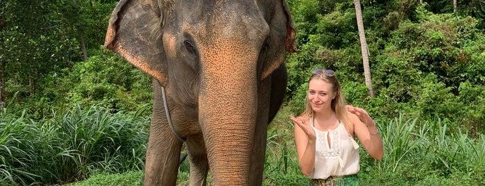 Elephant Tracking is one of Ko phangan - Coisas para fazer.