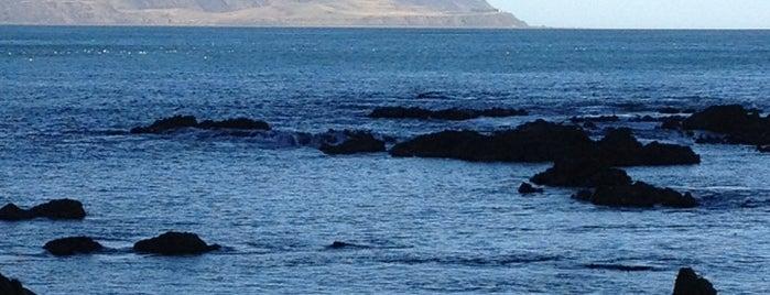 Owhiro Bay is one of Wellington.