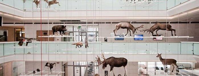 Musei e cose da vedere