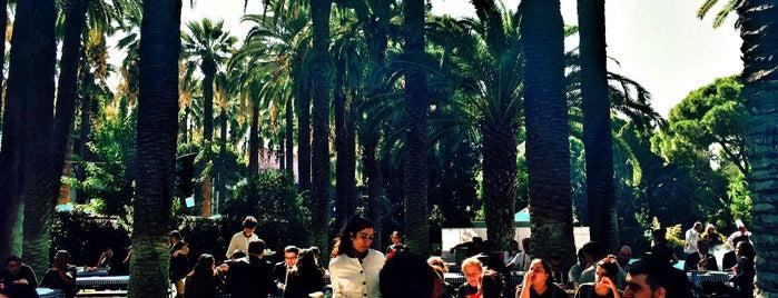 Swissotel Palm Garden is one of Lugares favoritos de Musa.
