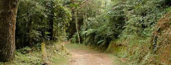 Parque Estadual da Cantareira - Núcleo Pedra Grande is one of Lieux qui ont plu à Susan.