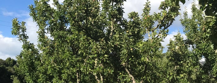 The Apple Farm is one of Tempat yang Disukai eric.
