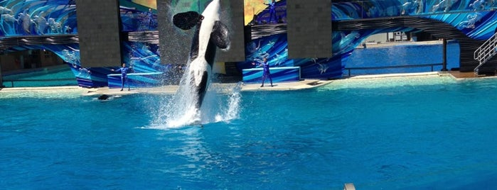 SeaWorld San Diego is one of Things to do in SoCal.