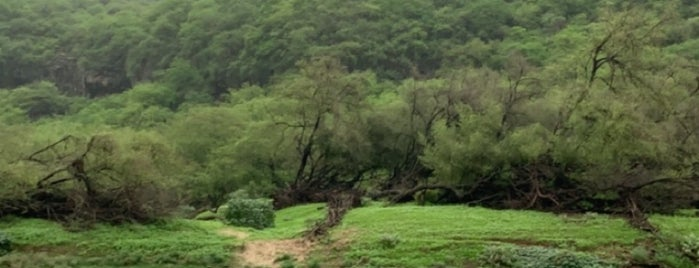 Wadi Darbat is one of Lieux qui ont plu à Olga.